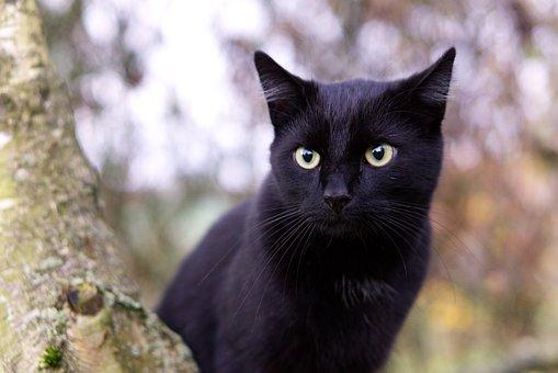 Cat, Tree, Climb, Kitten, Domestic Cat, In The Free