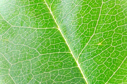 Macro, Isolated, Leaf, Green, Closeup, Nature, White