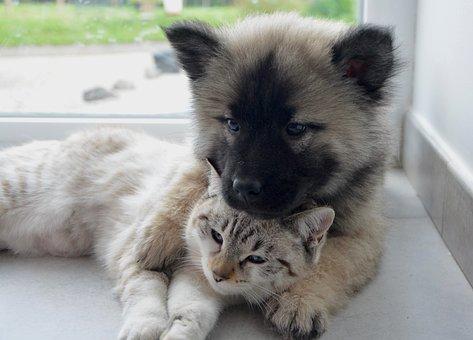 Dog Cat, Complicity, Hug, Kisses Dog Cat, Kisses, Kiss