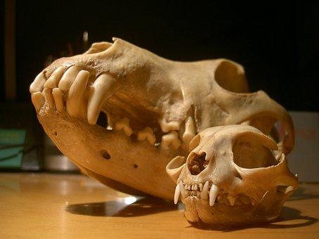Skull, Cat, Dog