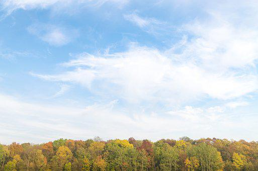 Autumn, Forest, Green, Nature, Sky, Blue, Summer, Plant