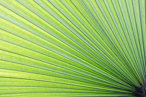 Green, Palm, Lea, Leaf, Tropical, Tree, Summer, Plant