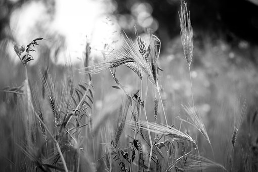 Weeds, Black And White, Meadow, Melancholy
