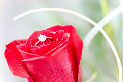 Flower, Rose, Macro, Nature, Detail, Gift, Ring, Silver