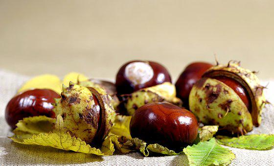 Autumn, Chestnuts, Horse Chestnut, Dry Leaves, Spikes