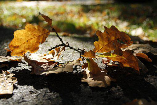 Dry, Sheet, Yellow, Autumn, Nature, October, Sunny, Day