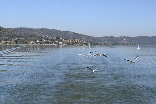 Trasimeno, Seagulls, The Greater Island, Ferry, Umbria
