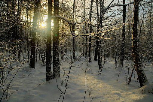 Winter, Snow, View, Forest, Tree, Landscape, Nature