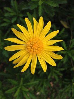 Flower, Nature, Flowers, Small Flower, Yellow