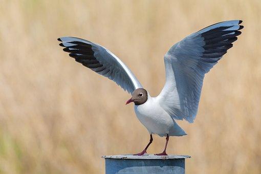 Animal, Fly, Start, Nature, Gull, Bird, Wing, Angel