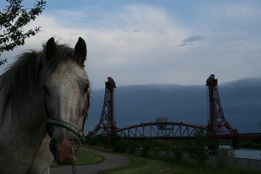 Horse, Horses, Bridge, Industrial, Architecture, River