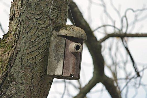 Aviary, Nesting Box, Nature Conservation, Bird Feeder