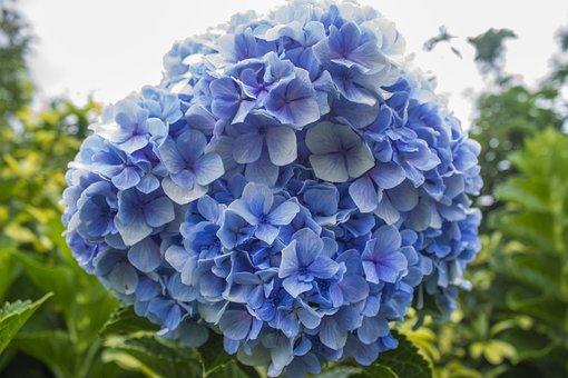 Flowers, Blue, Nature, Plant, Green, Flower, Plants