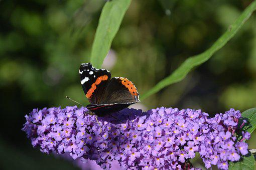 Butterfly, Flower, Sums