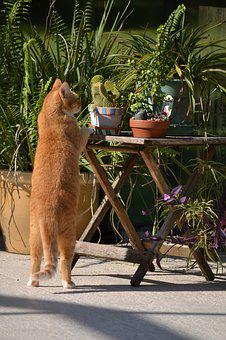 Inquisitive Cat, Cat Standing On Hind Legs, Curious