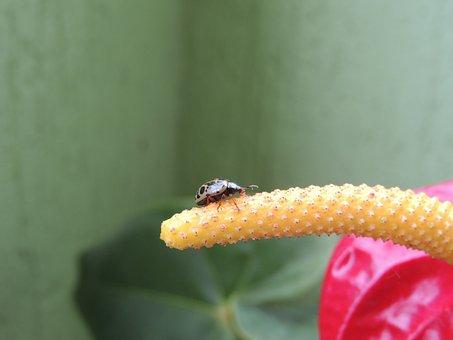 Macro, Insect, Ladybug, Colombia
