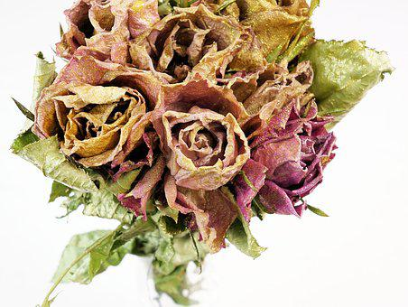 Roses, Dry, Dried Flowers, Flower, Nature, Plant