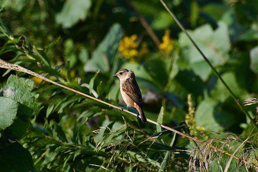 Animal, Grass, Flowering Plant, Bird, Wild Birds