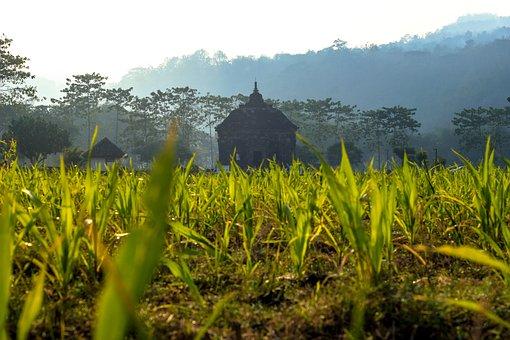 Temple, Landscape, Hinduism, Banyunibo, Nature