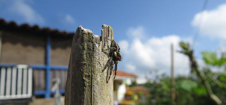 Insect, Spider, Arachnid, Macro, Colombia
