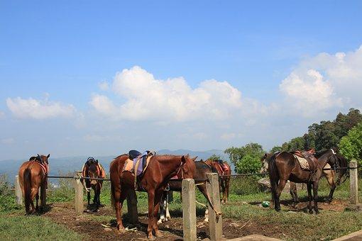 Candi, Kedongsongo, Bandungan, Blue Candy