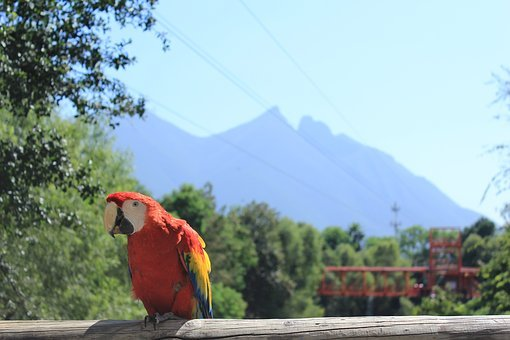 Landscape, Ave, Macaw, Nature, Bird, Animals, Natural