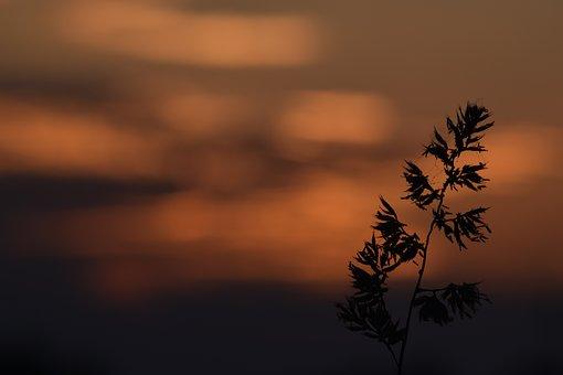 Grass, Macro, Sunset, Plants, Nature, Meadow