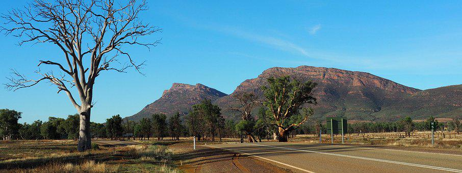 Outback Australia, Flinders Ranges, Remote, Dead Trees