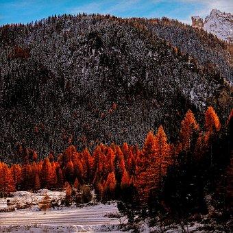 Valle Stretta, Piemonte, Italy, Autumn, Trees, Snow