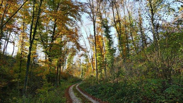 Landscape, Forest, Trees, Leaves, Sun, Light, Away