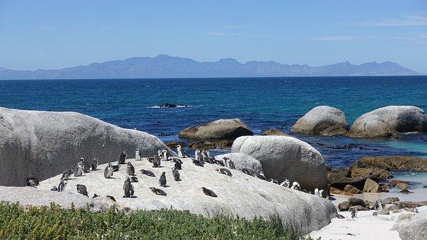 Penguin, Sea View, Sunshine, Blue Sky, Beach