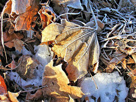 Leaves, Frosty, Dried, Ice, Colorful, Texture, Autumn