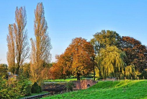 Trees, Grass, Landscape, Rural, Holland, Middelpolder