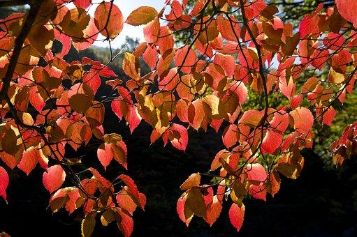 Jiri Pia Country, Autumn Leaves, Walk