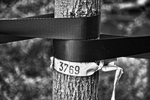 Young Tree, Tree Trunk, Bands, Support, Number, Park