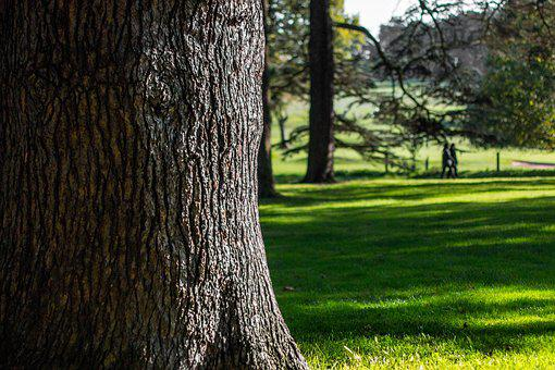 Nature, Tree, Natural, Forest, Green, Light, Bright