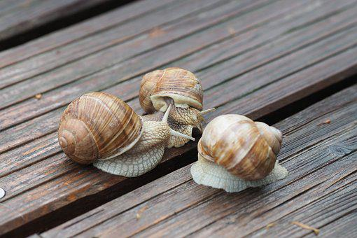 Snail, Mollusk, Shell, Mucus, Close
