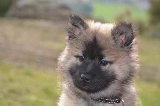 Dog, Pup, Bitch Nova, Domestic Animal, Female, Animal