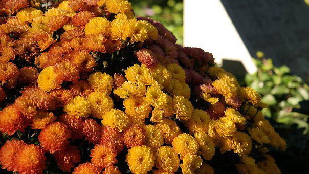 Floral, Fall, Orange, Leaf, Nature, Yellow, Color
