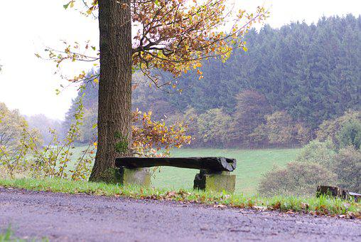 Bank, Tree, Walk, Nature, Forest, Benches