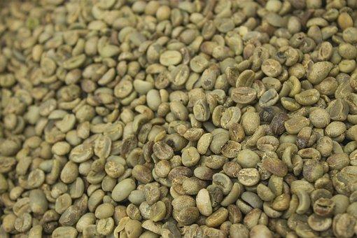 Seed Coffee Not In Shell Dried, Seed, Coffee, Grain