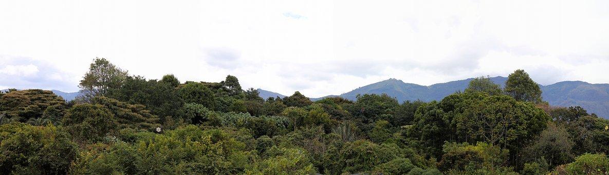 Bogotá, Panorama, Botanical Garden, Trees, Nature