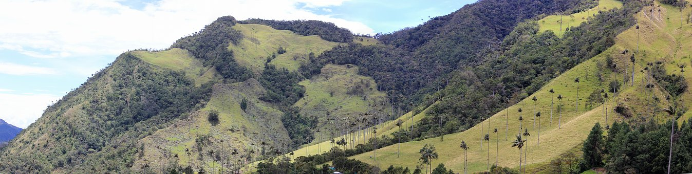 Valle De Cocora, Panorama, Palm Trees, Mountains