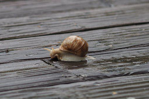 Snail, Rain, Land Snail, Housing, Shell, Animal, Slimy