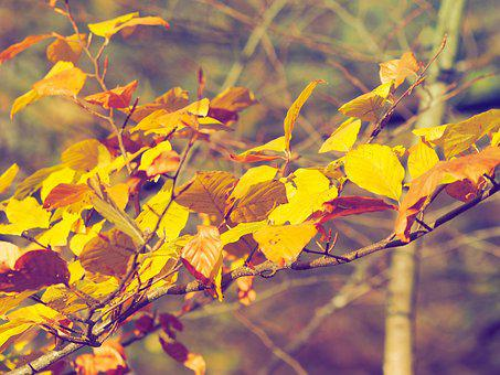 Fall, Nature, Trees, Autumn Landscape, Leaves