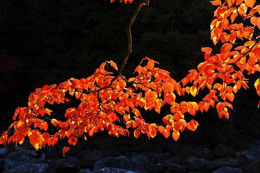 Fall Color, Autumn Leaves, Jiri Pia Country, Walk