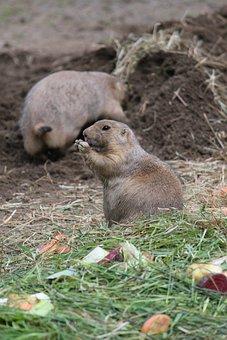 Animal, Rodent, Zoo, Wildlife Photography, Creature