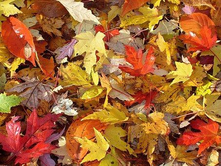Fall Foliage, Autumn, Leaves, Golden Autumn, Yellow