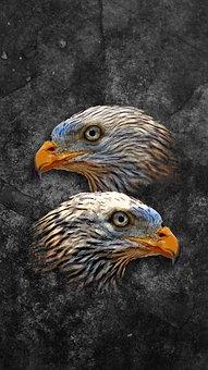 Animals, Bird, Art, Wildlife, Feather, Chicken, Nature
