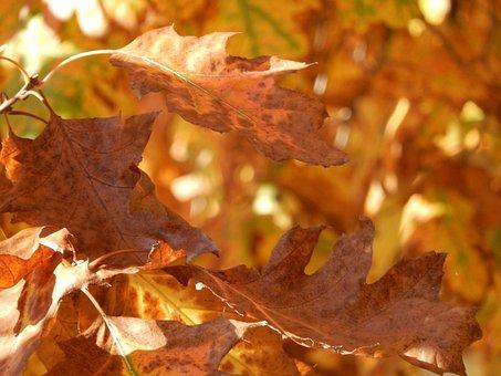 Halloween, Autumn, Leaves, October, Decoration, Season